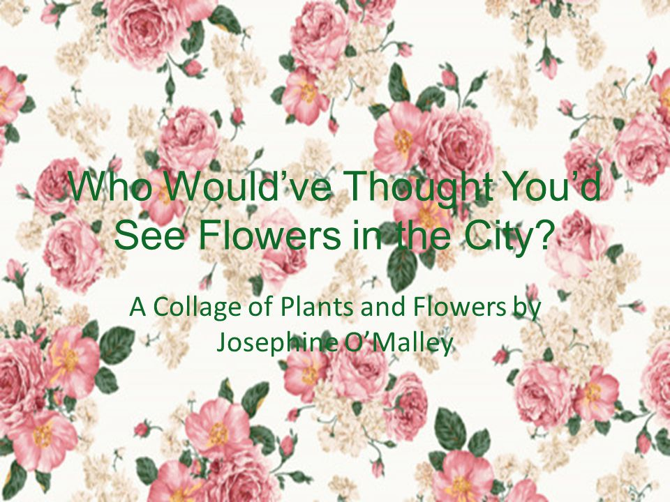 Who Would've Thought You'd See Flowers in the City.