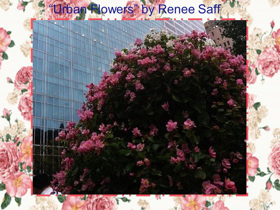 Urban Flowers by Renee Saff