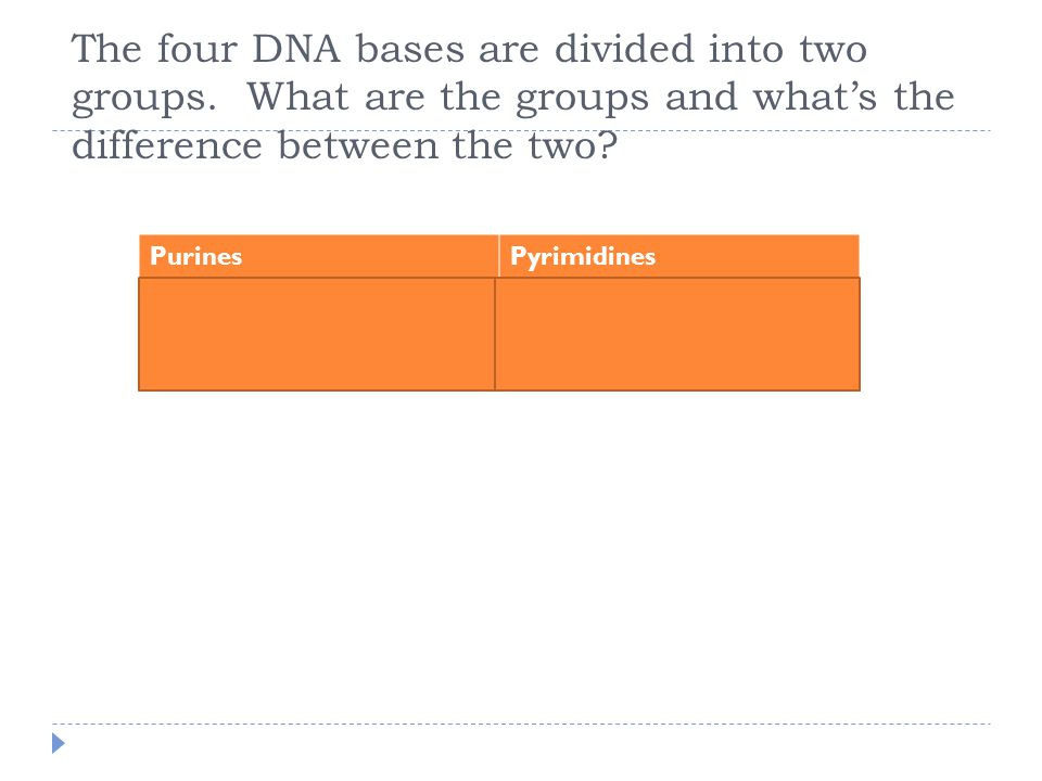 The four DNA bases are divided into two groups.