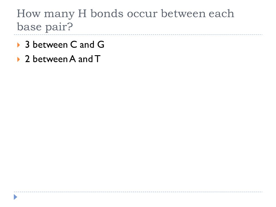 How many H bonds occur between each base pair  3 between C and G  2 between A and T