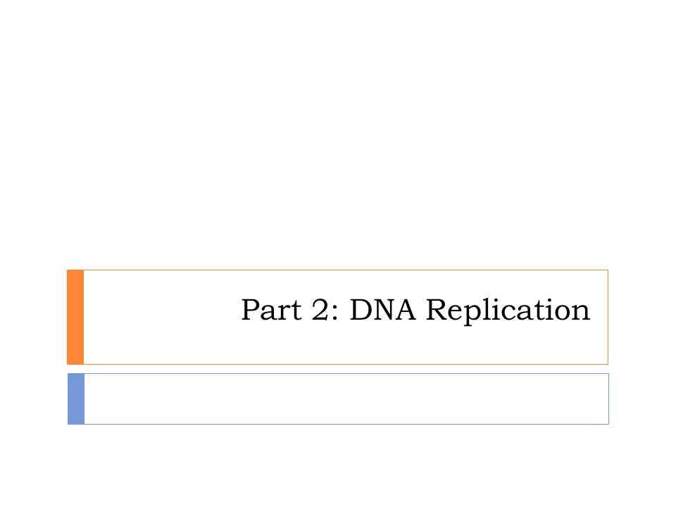 Part 2: DNA Replication