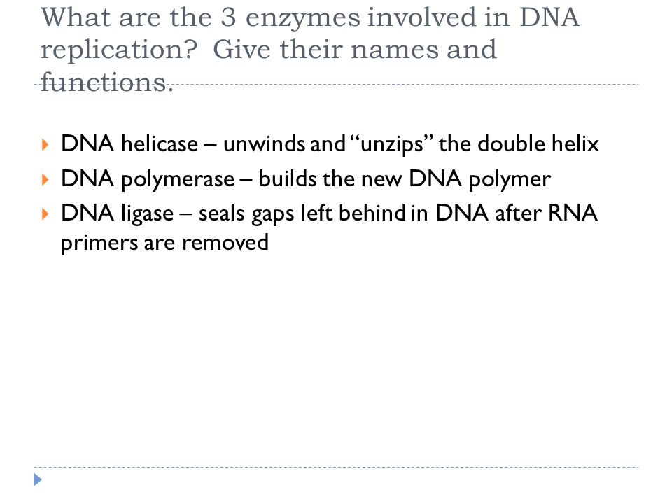 What are the 3 enzymes involved in DNA replication.