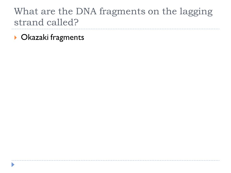 What are the DNA fragments on the lagging strand called?  Okazaki fragments