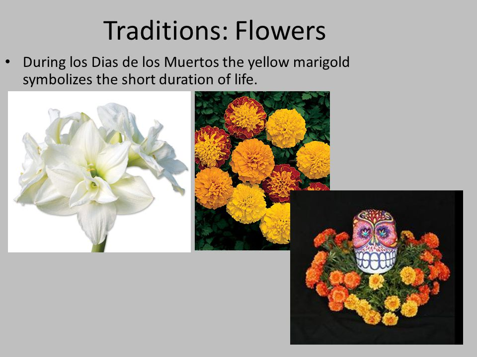 Traditions: Flowers During los Dias de los Muertos the yellow marigold symbolizes the short duration of life.