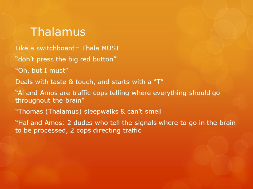 "Thalamus Like a switchboard= Thala MUST ""don't press the big red button"" ""Oh, but I must"" Deals with taste & touch, and starts with a ""T"" ""Al and Amos"