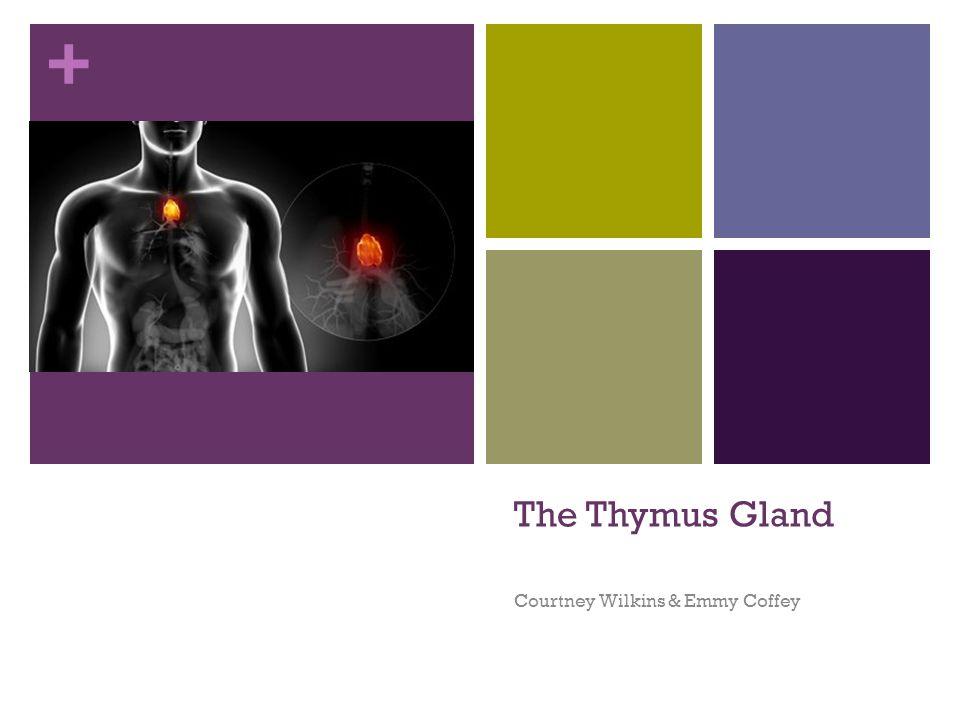 + The Thymus Gland Courtney Wilkins & Emmy Coffey