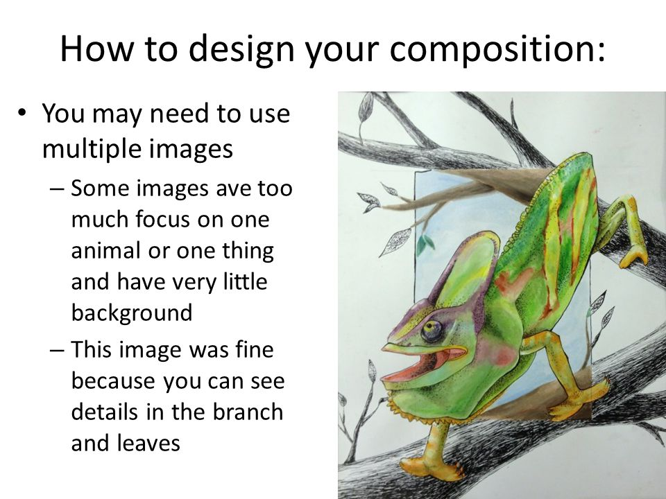 How to design your composition: You may need to use multiple images – Some images ave too much focus on one animal or one thing and have very little b