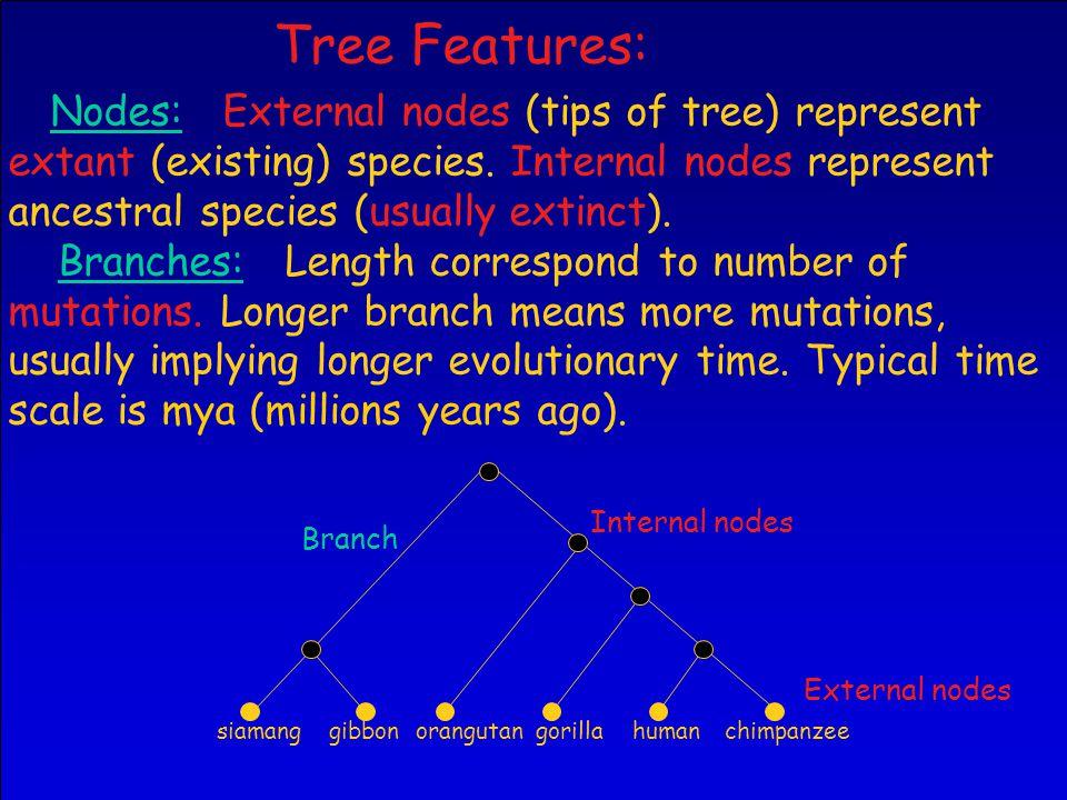 Nodes: External nodes (tips of tree) represent extant (existing) species.