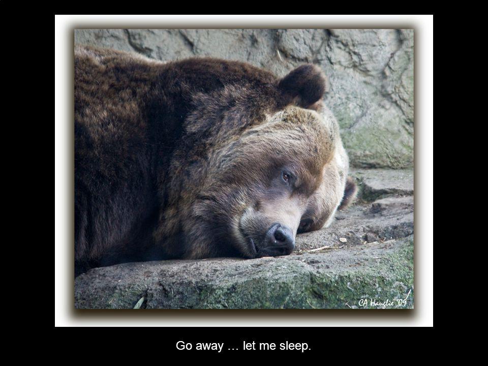 Go away … let me sleep.