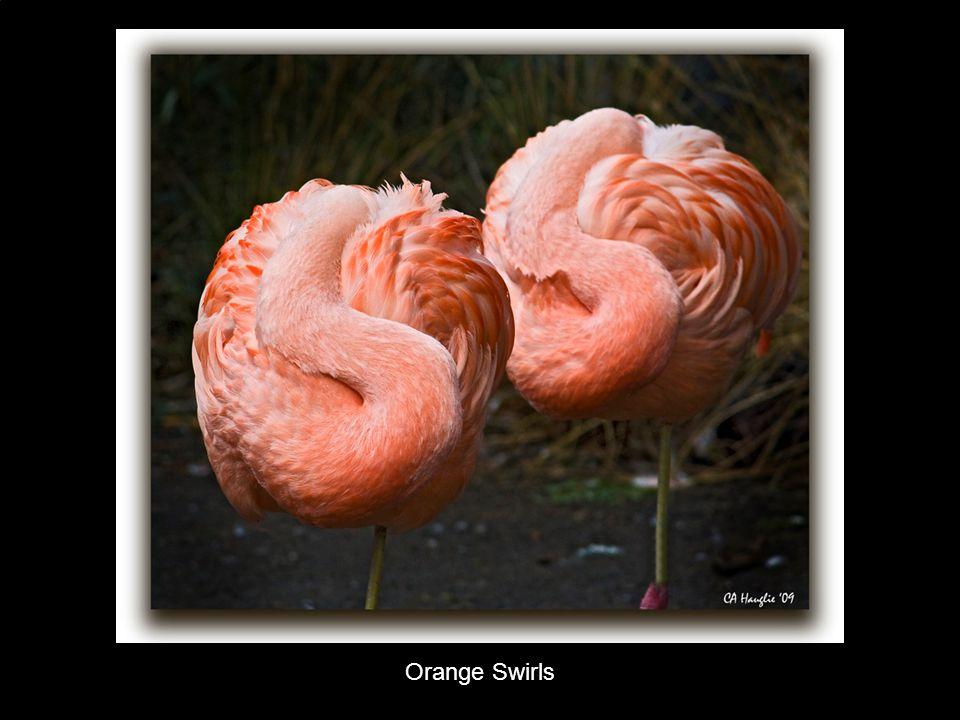 Orange Swirls