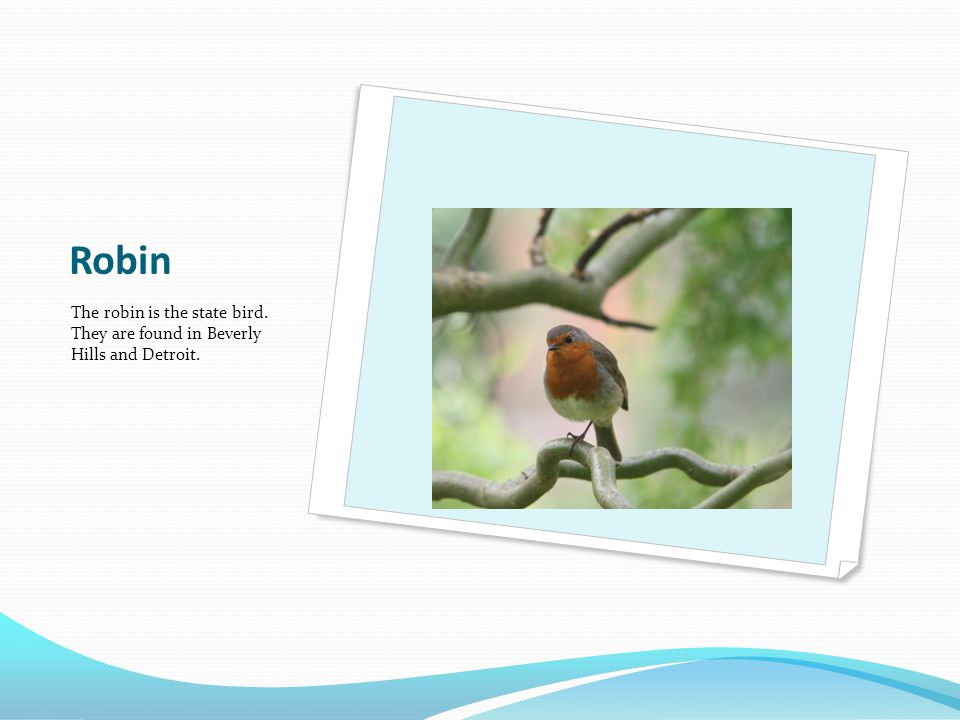 Robin The robin is the state bird. They are found in Beverly Hills and Detroit.