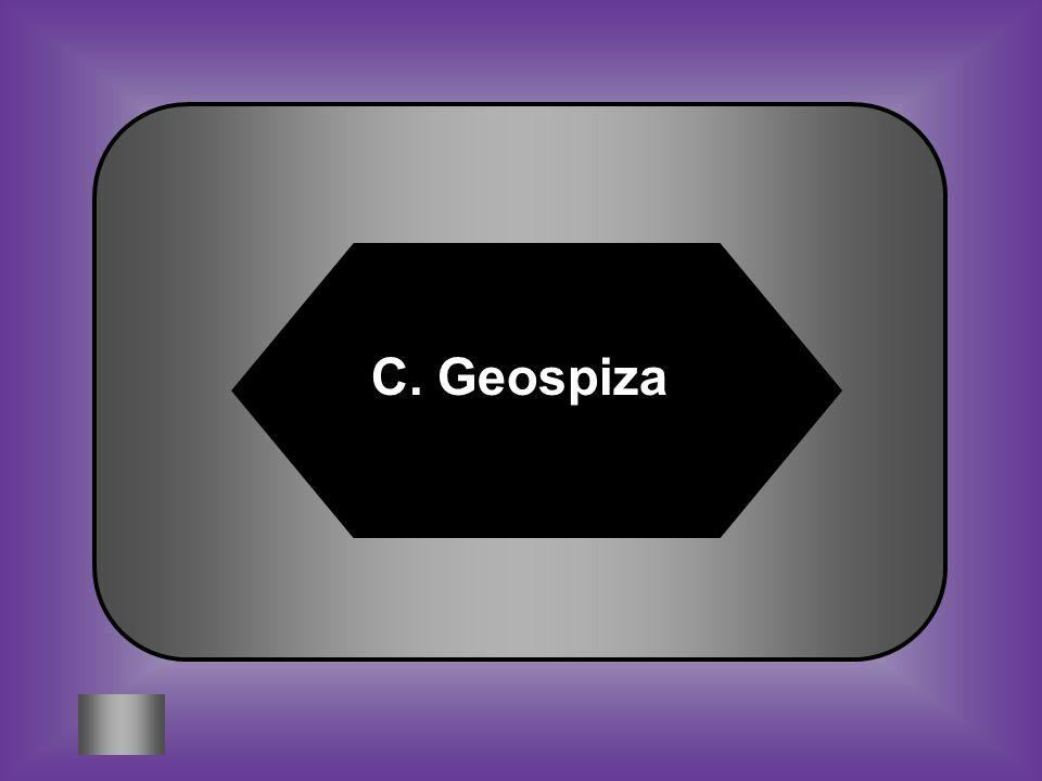 A: B: Certhidea Platyspiza C:D: Geospiza Camarhynchus Using the dichotomous key, identify the name of Bird X #3
