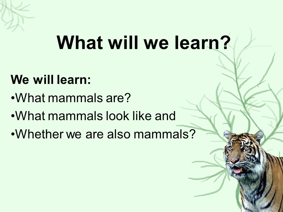 So are we mammals.Do we have 4 limbs. Do we have hair on our bodies.