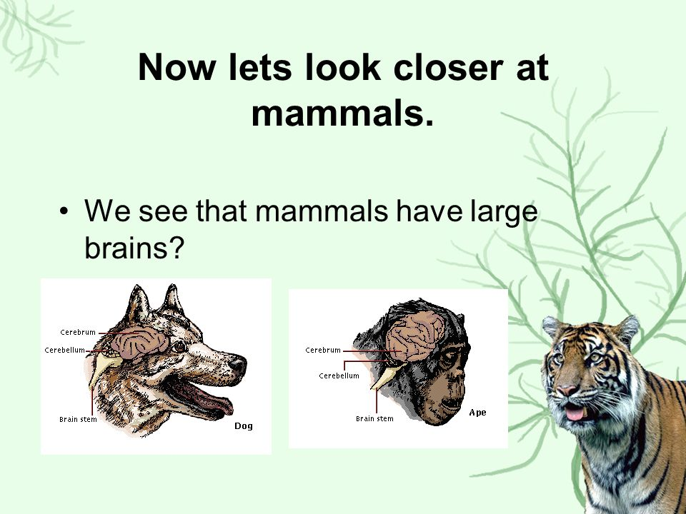 So what do we know about mammals.We saw that most mammals have 4 limbs.