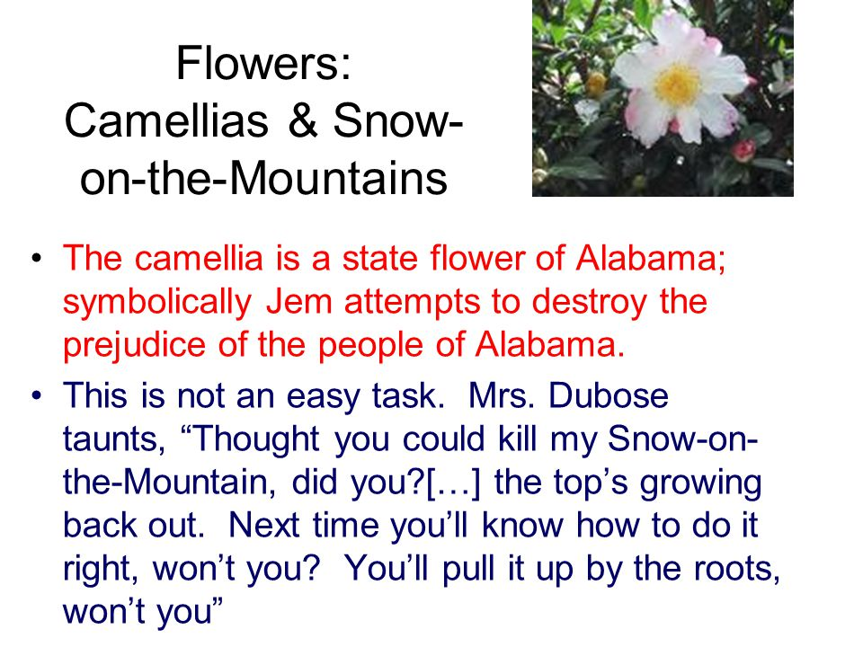 Flowers: Camellias & Snow- on-the-Mountains The camellia is a state flower of Alabama; symbolically Jem attempts to destroy the prejudice of the peopl