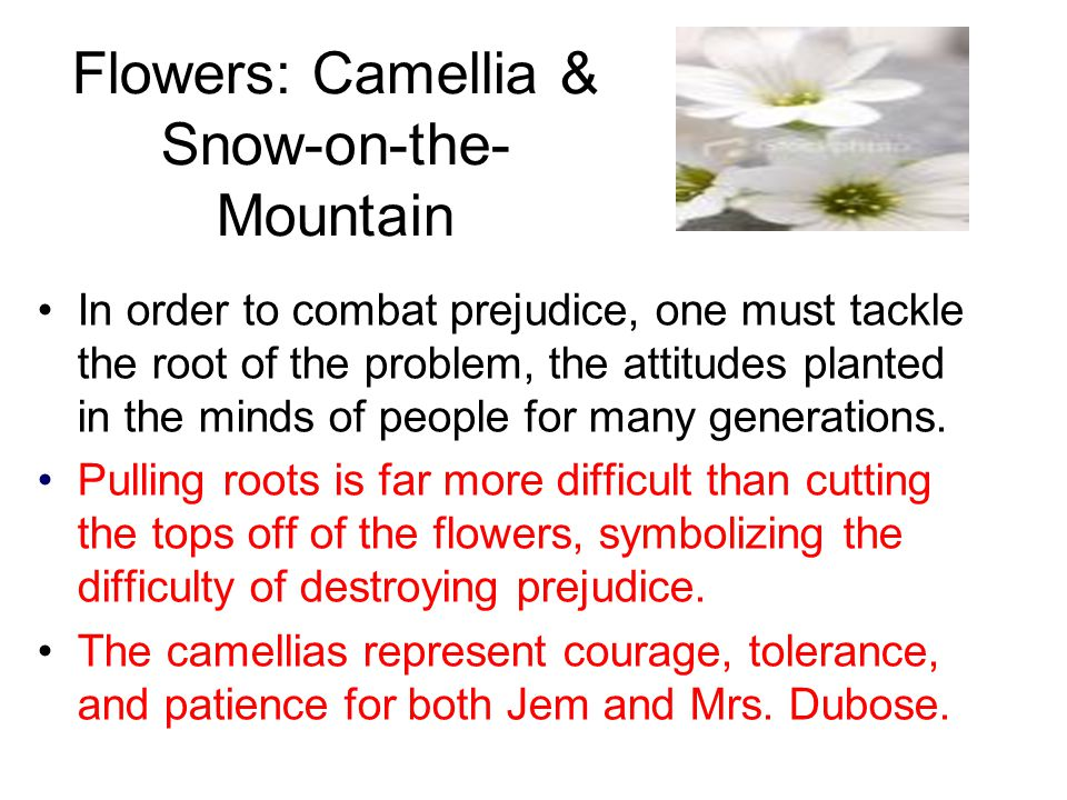 Flowers: Camellia & Snow-on-the- Mountain In order to combat prejudice, one must tackle the root of the problem, the attitudes planted in the minds of