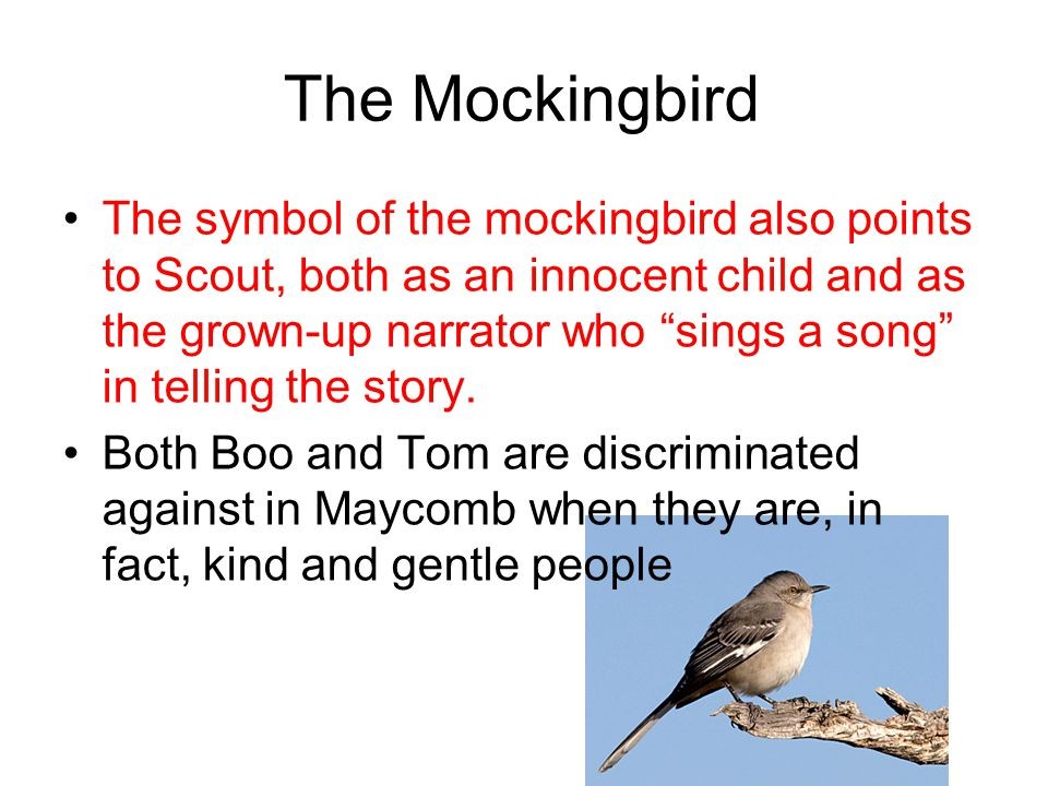 to kill a mockingbird essay point of view