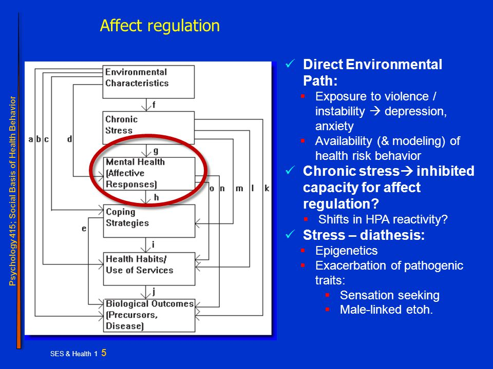 Psychology 415; Social Basis of Health Behavior SES & Health 1 5 Affect regulation Direct Environmental Path:  Exposure to violence / instability  depression, anxiety  Availability (& modeling) of health risk behavior Chronic stress  inhibited capacity for affect regulation.