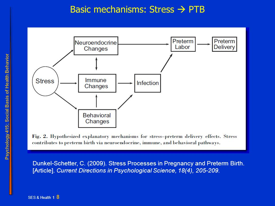 Psychology 415; Social Basis of Health Behavior SES & Health 1 8 Basic mechanisms: Stress  PTB Dunkel-Schetter, C.