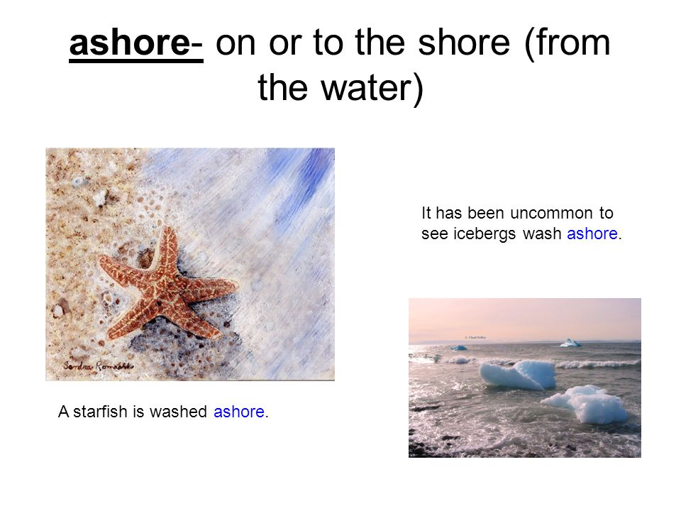 ashore- on or to the shore (from the water) A starfish is washed ashore.