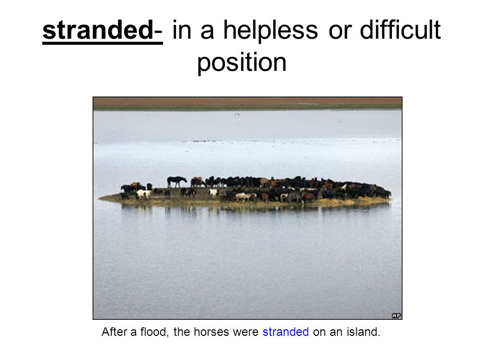 stranded- in a helpless or difficult position After a flood, the horses were stranded on an island.