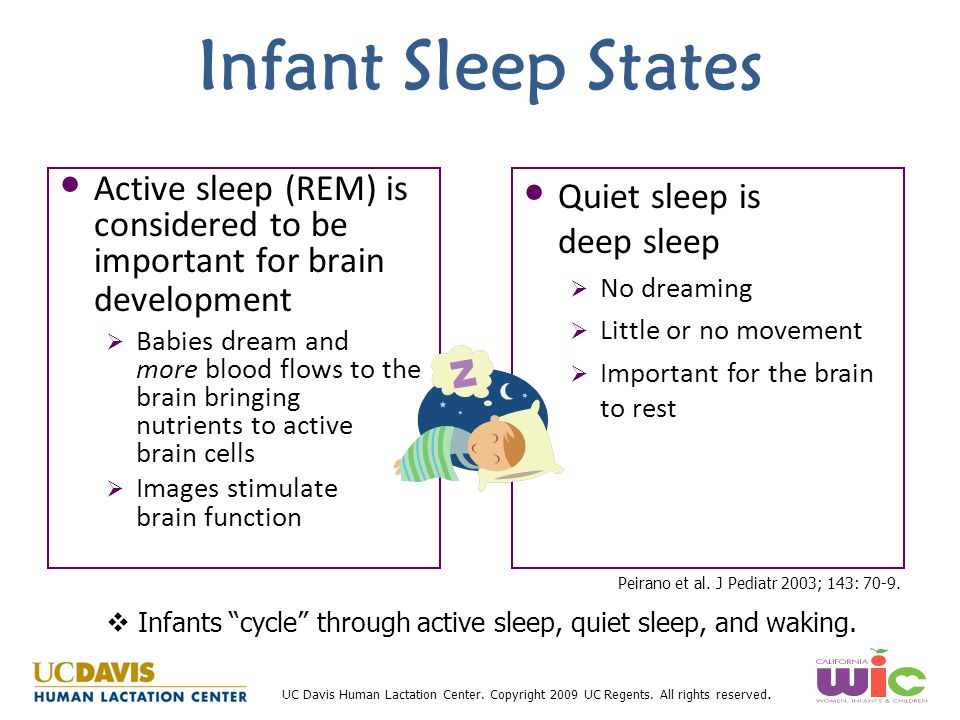 UC Davis Human Lactation Center. Copyright 2009 UC Regents. All rights reserved. Infant Sleep States Active sleep (REM) is considered to be important