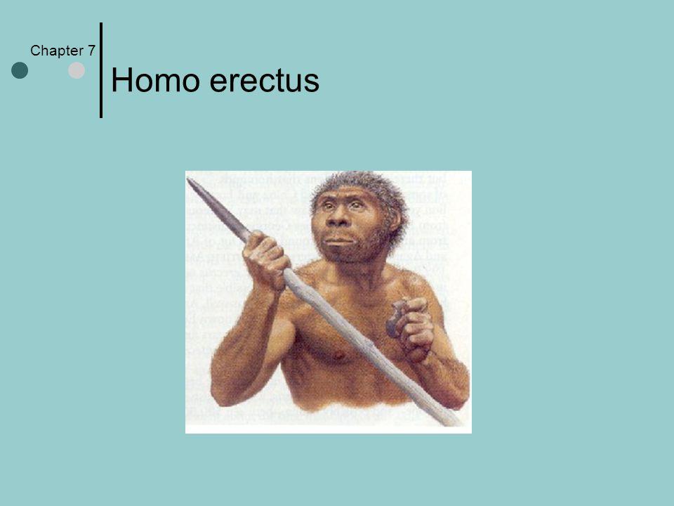 Chapter 7 Homo erectus