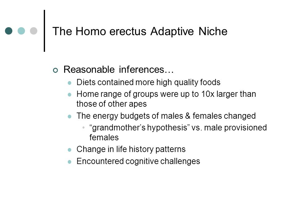 The Homo erectus Adaptive Niche Reasonable inferences… Diets contained more high quality foods Home range of groups were up to 10x larger than those of other apes The energy budgets of males & females changed grandmother's hypothesis vs.