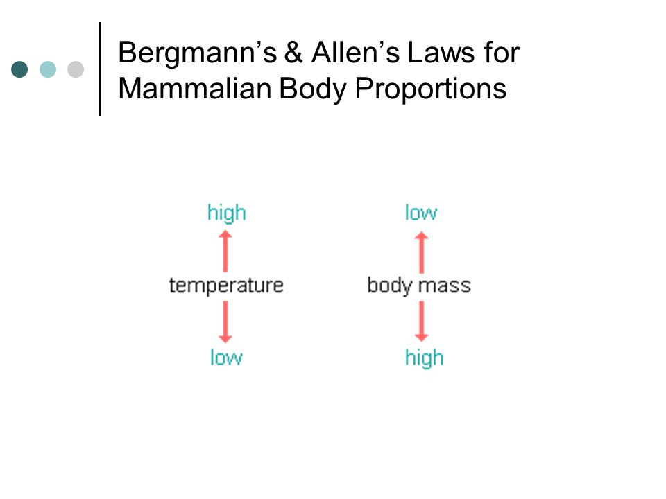 Bergmann's & Allen's Laws for Mammalian Body Proportions