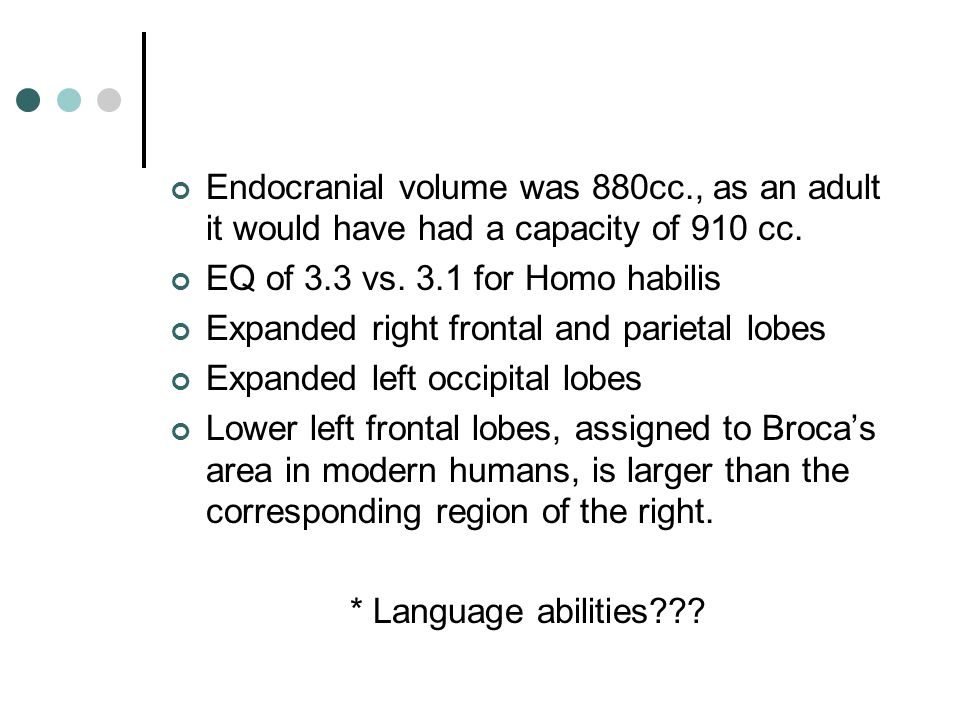 Endocranial volume was 880cc., as an adult it would have had a capacity of 910 cc.
