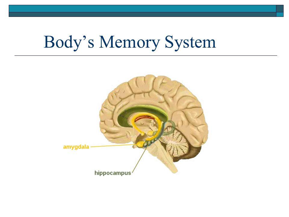 Body's Memory System