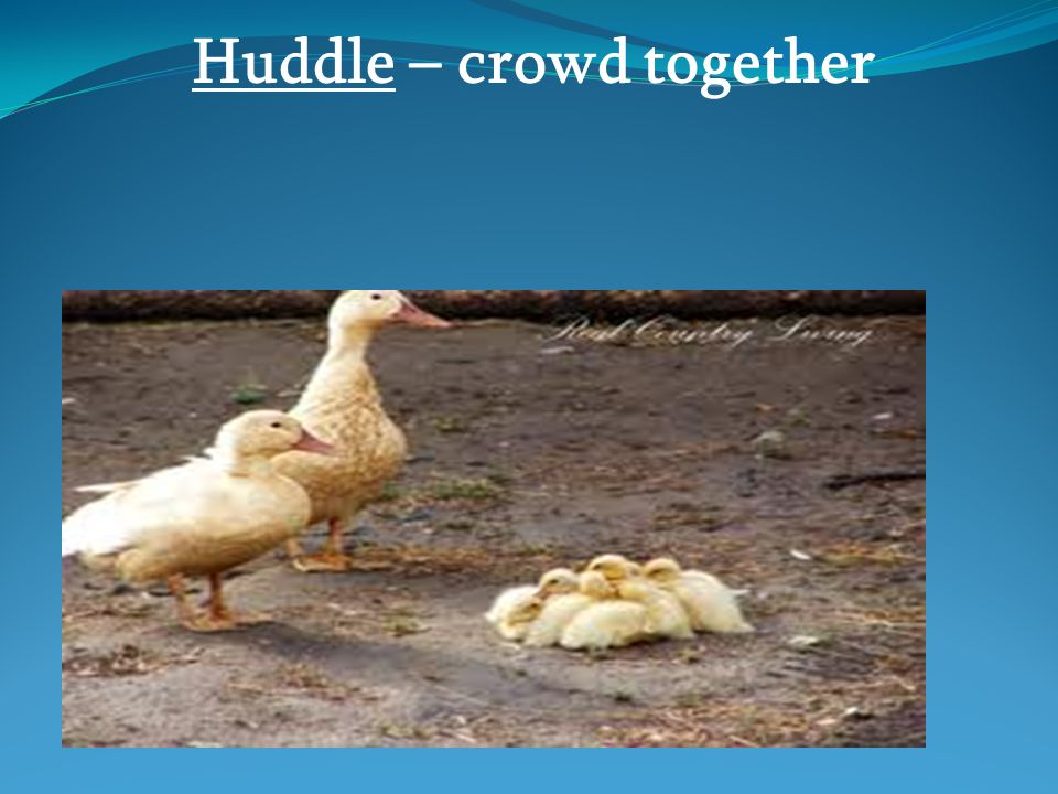 Huddle – crowd together