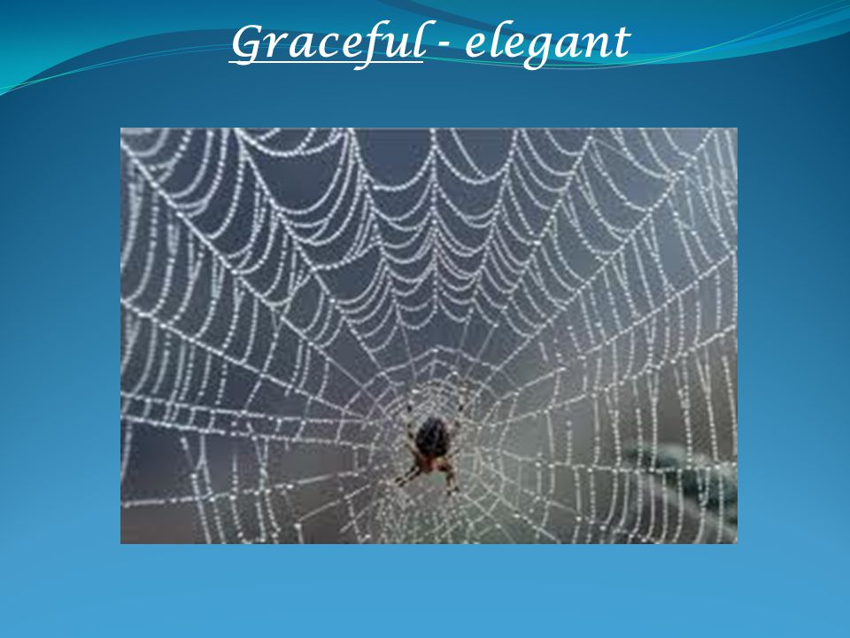 Graceful - elegant