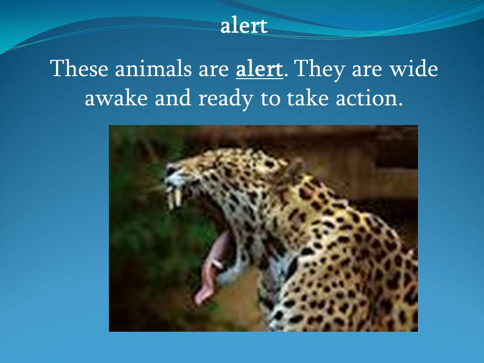 alert These animals are alert. They are wide awake and ready to take action.