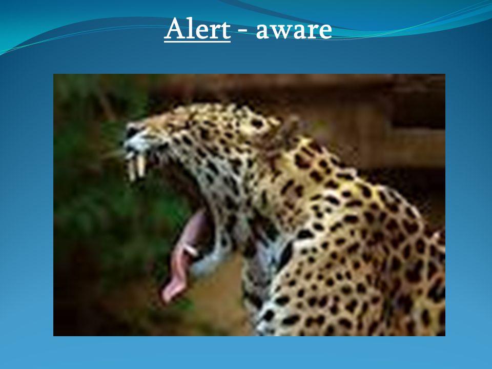 Alert - aware