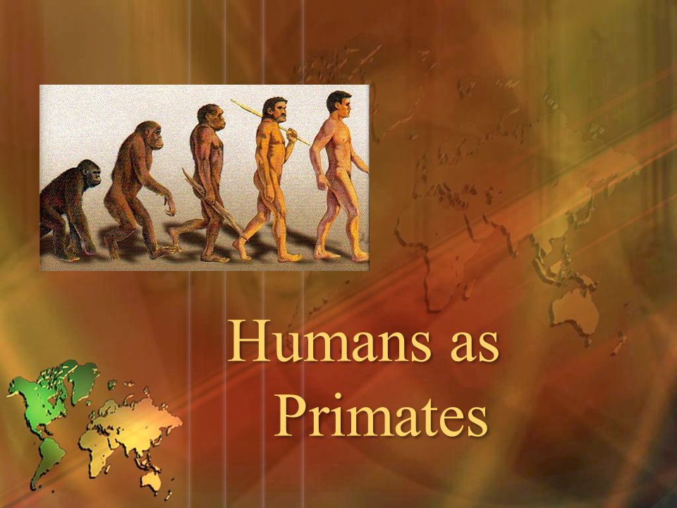 Humans as Primates
