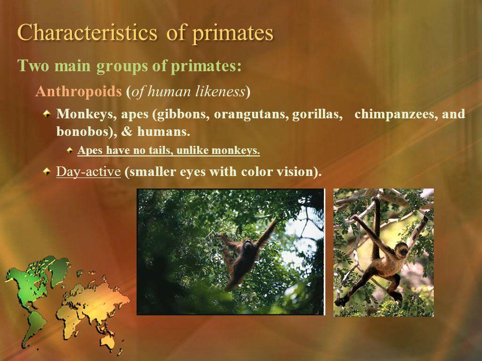 Characteristics of primates Two main groups of primates: Anthropoids (of human likeness) Monkeys, apes (gibbons, orangutans, gorillas, chimpanzees, an