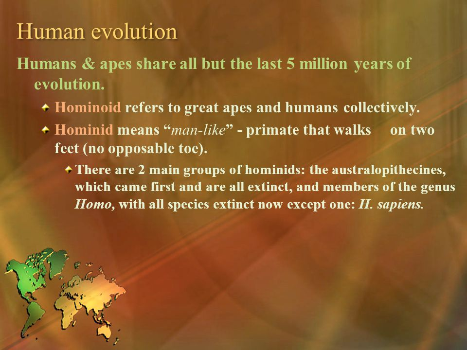 Human evolution Humans & apes share all but the last 5 million years of evolution. Hominoid refers to great apes and humans collectively. Hominid mean