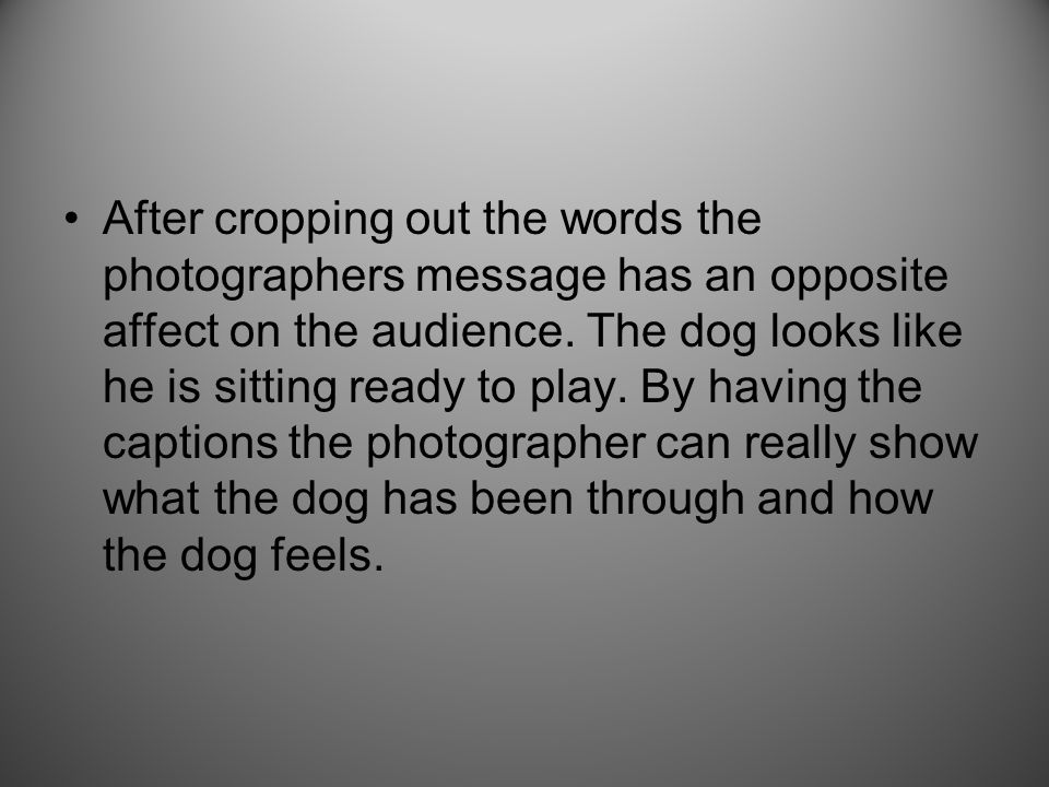 After cropping out the words the photographers message has an opposite affect on the audience. The dog looks like he is sitting ready to play. By havi