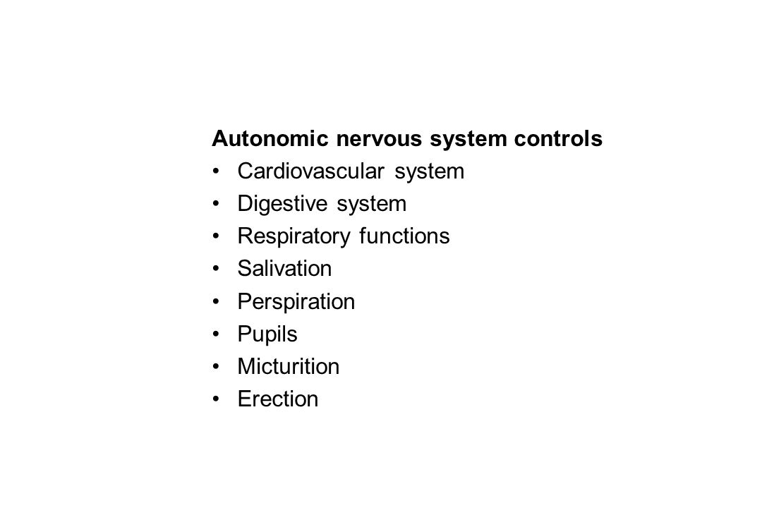 Autonomic nervous system controls Cardiovascular system Digestive system Respiratory functions Salivation Perspiration Pupils Micturition Erection