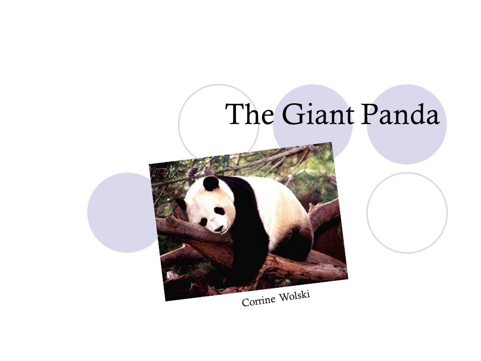 What we will learn about the panda.