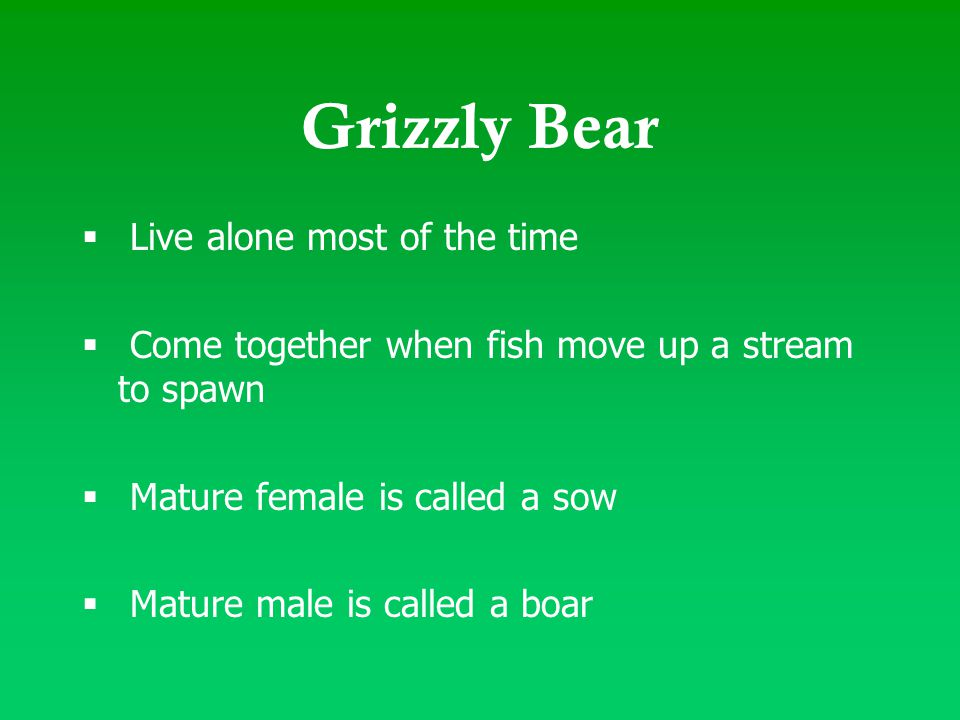 Grizzly Bear  Live alone most of the time  Come together when fish move up a stream to spawn  Mature female is called a sow  Mature male is called