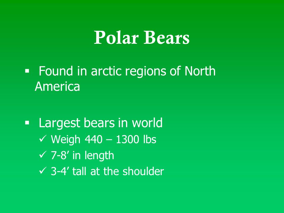 Polar Bears  Found in arctic regions of North America  Largest bears in world Weigh 440 – 1300 lbs 7-8' in length 3-4' tall at the shoulder