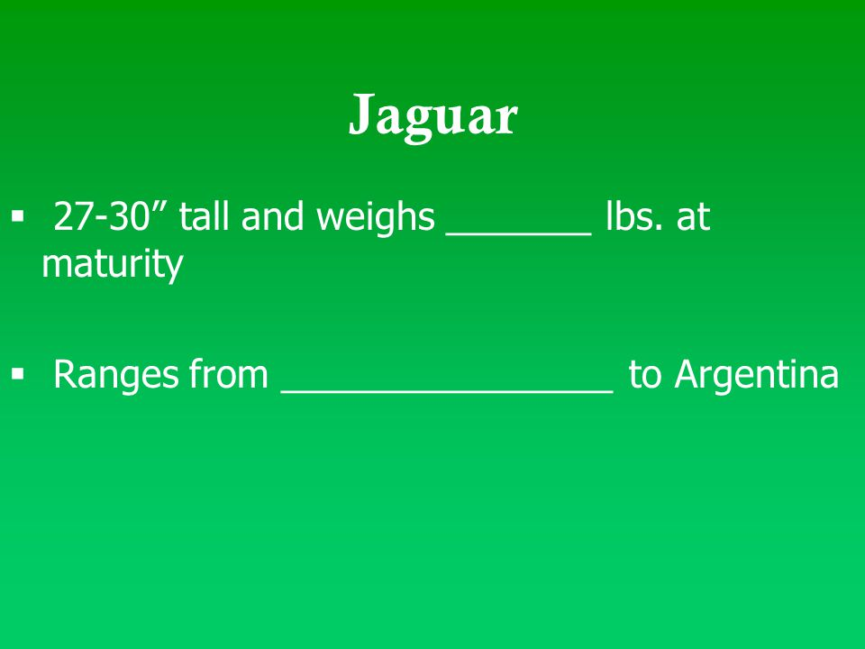 "Jaguar  27-30"" tall and weighs _______ lbs. at maturity  Ranges from ________________ to Argentina"