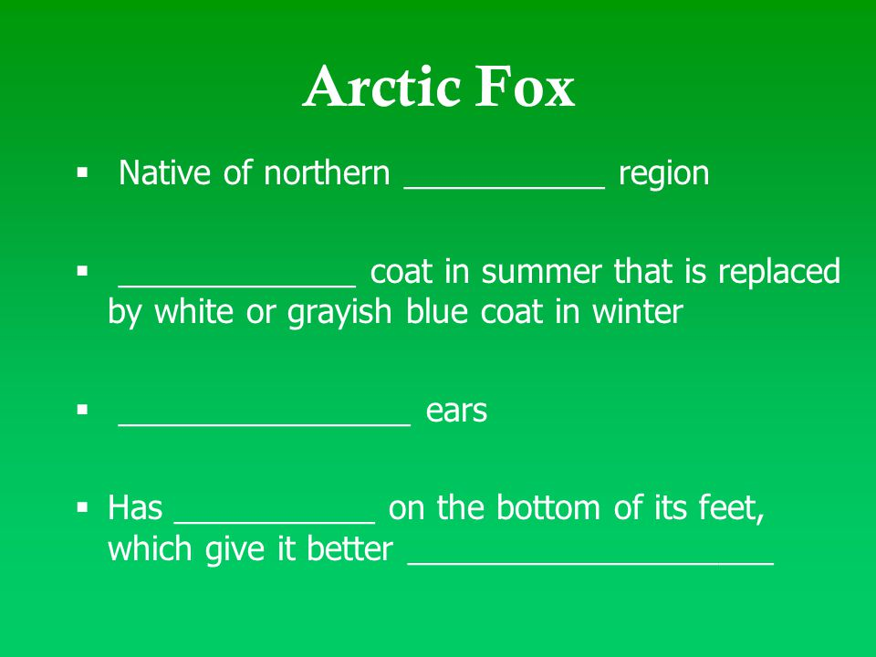 Arctic Fox  Native of northern ___________ region  _____________ coat in summer that is replaced by white or grayish blue coat in winter  _________