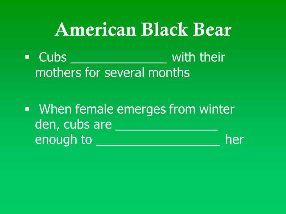 American Black Bear  Cubs ______________ with their mothers for several months  When female emerges from winter den, cubs are _______________ enough