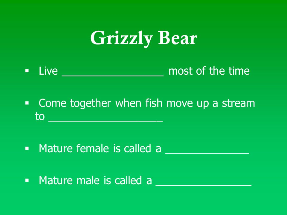 Grizzly Bear  Live _________________ most of the time  Come together when fish move up a stream to ___________________  Mature female is called a _