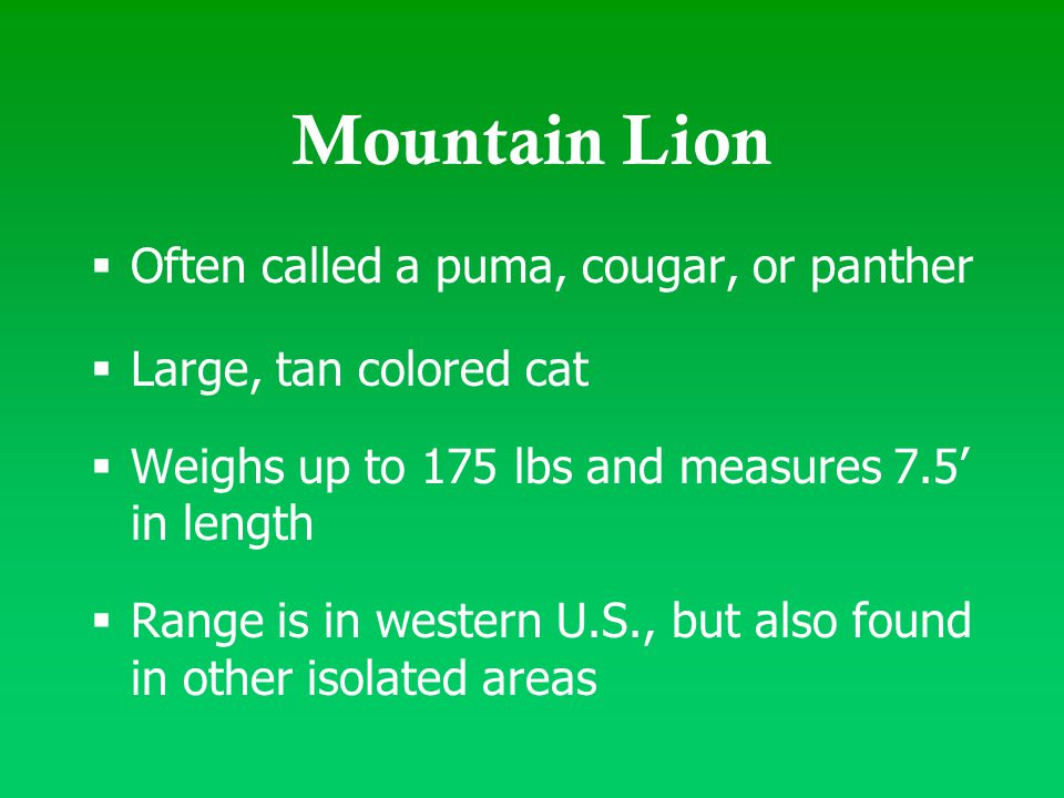  Often called a puma, cougar, or panther  Large, tan colored cat  Weighs up to 175 lbs and measures 7.5' in length  Range is in western U.S., but