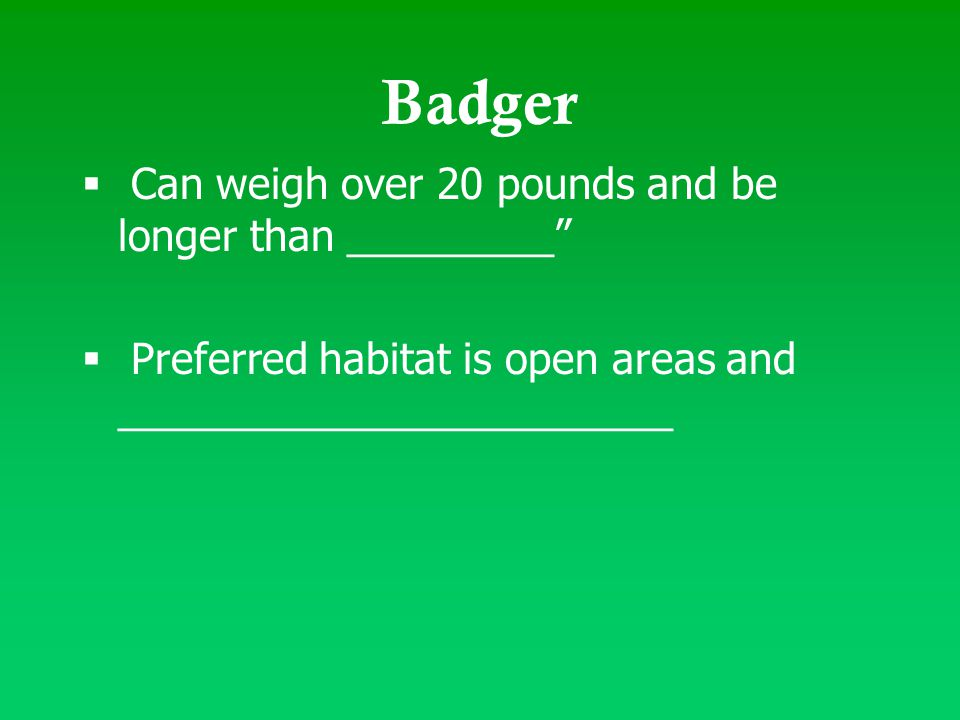"Badger  Can weigh over 20 pounds and be longer than _________""  Preferred habitat is open areas and ________________________"