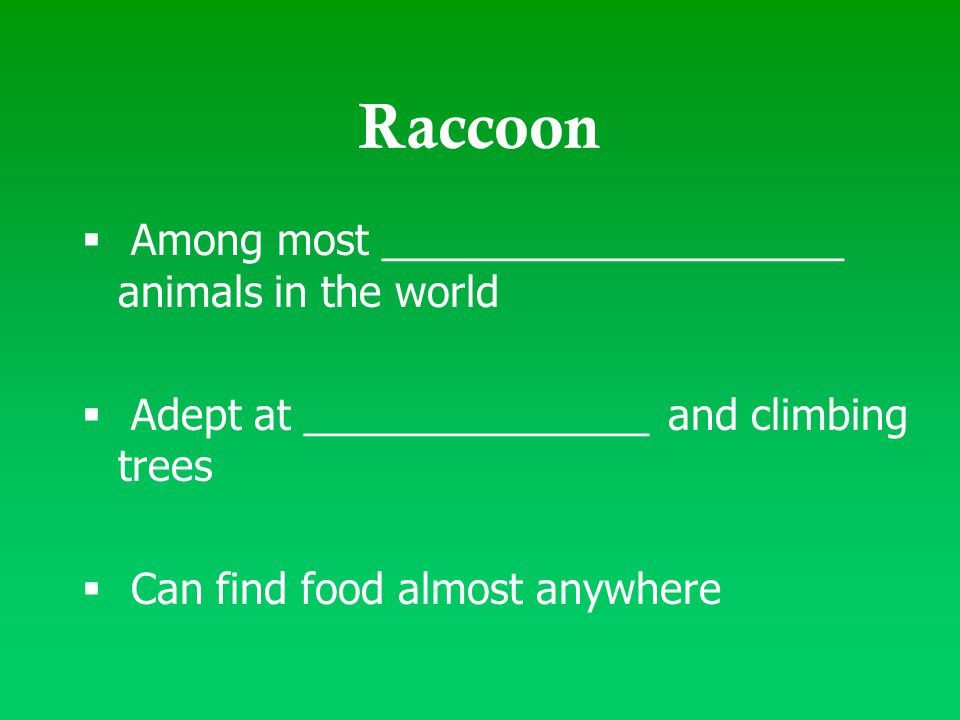  Among most ____________________ animals in the world  Adept at _______________ and climbing trees  Can find food almost anywhere